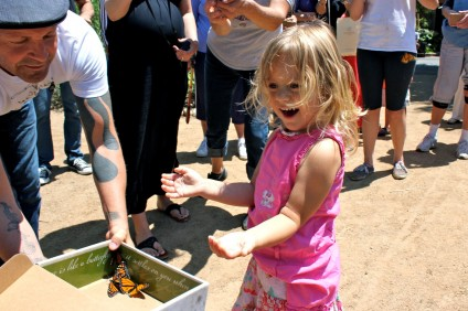 Lucy McCray, goddaughter of Ramos House Café owner John Q. Humphries, watches in amazement as a box of monarch butterflies are release into Los Rios Park. Humphries donated four dozen butterflies after witnessing an individual capture several of them last month. Photo by Brian Park