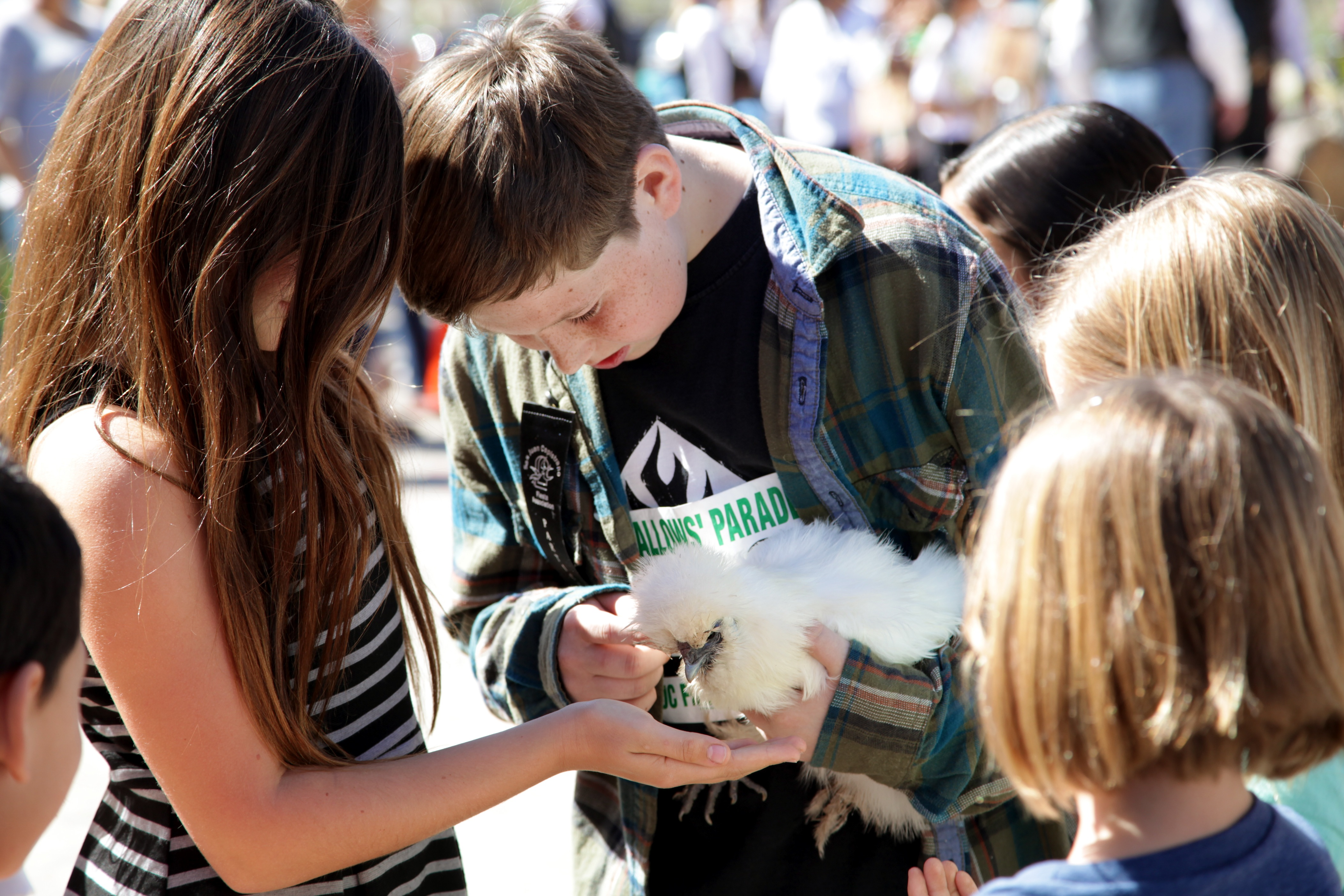 Brayden Windes lets other kids feed his pet silkie chicken. Photo by Brian Park