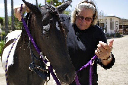 Kathy Holman, president of Otra Mas and owner of Ortega Equestrian Center, places a bridle over Chips, a 9-year-old pinto pony. Photo: Brian Park