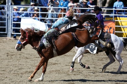 A cowboy tries to stay on his horse during the bareback riding contest. Photo: Alan Gibby/Zone57 Media
