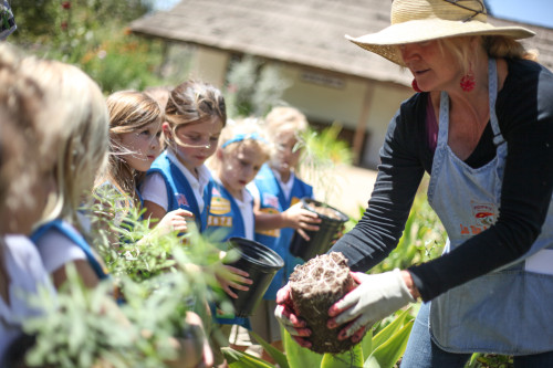 Marianne Taylor shows a troop of girl scouts from the Laguna Niguel area the root system of the milkweed they grew for the Los Rios Park certified butterfly garden. Photo: Allison Jarrell