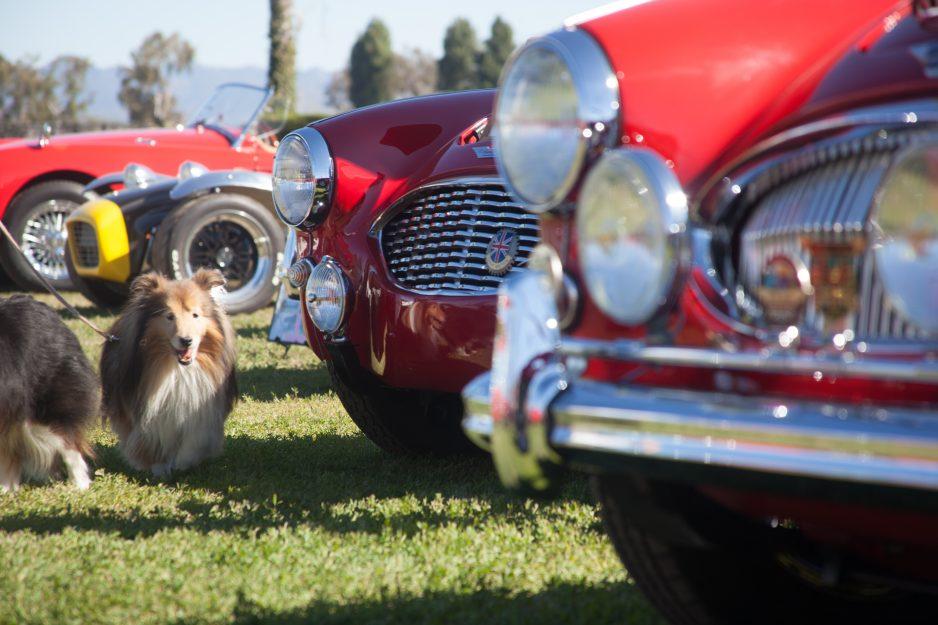 Man's best friend met man's favorite hobby at last year's San Juan Capistrano Rotary Car Show. Photo: Alex Paris