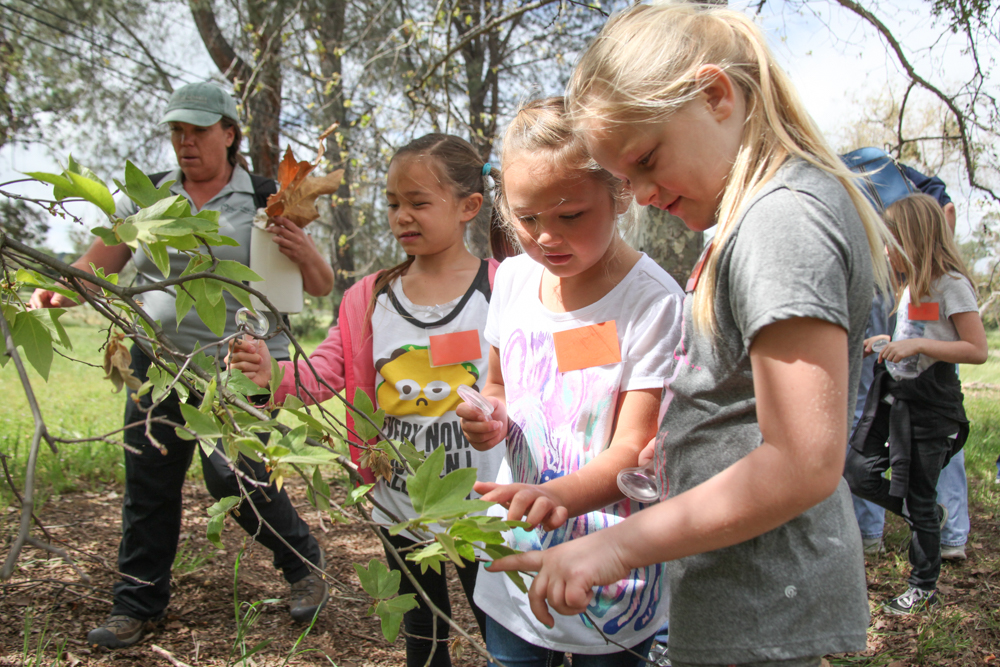 """Ambuehl Elementary School first-graders examine the leaves on the trees as part of the """"wildlife investigators"""" program on The Reserve."""