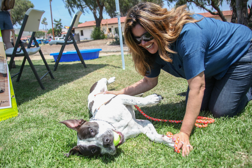 Doggie Bonez founder Jacqueline Rivera plays with Banjo, a 1.5-year-old Staffordshire terrier. Banjo is one of the dogs up for adoption from the rescue. Photo: Allison Jarrell