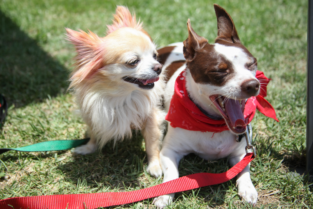 Twinkie, 5, and Cozmoe, also 5, relax in the sunshine during the day's events. Photo: Allison Jarrell