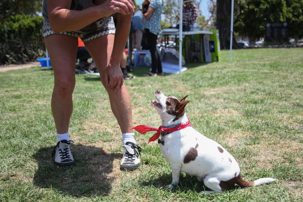 Tara Lupo, of San Juan Capistrano, has her dog Cozmoe perform some tricks for treats. Photo: Allison Jarrell