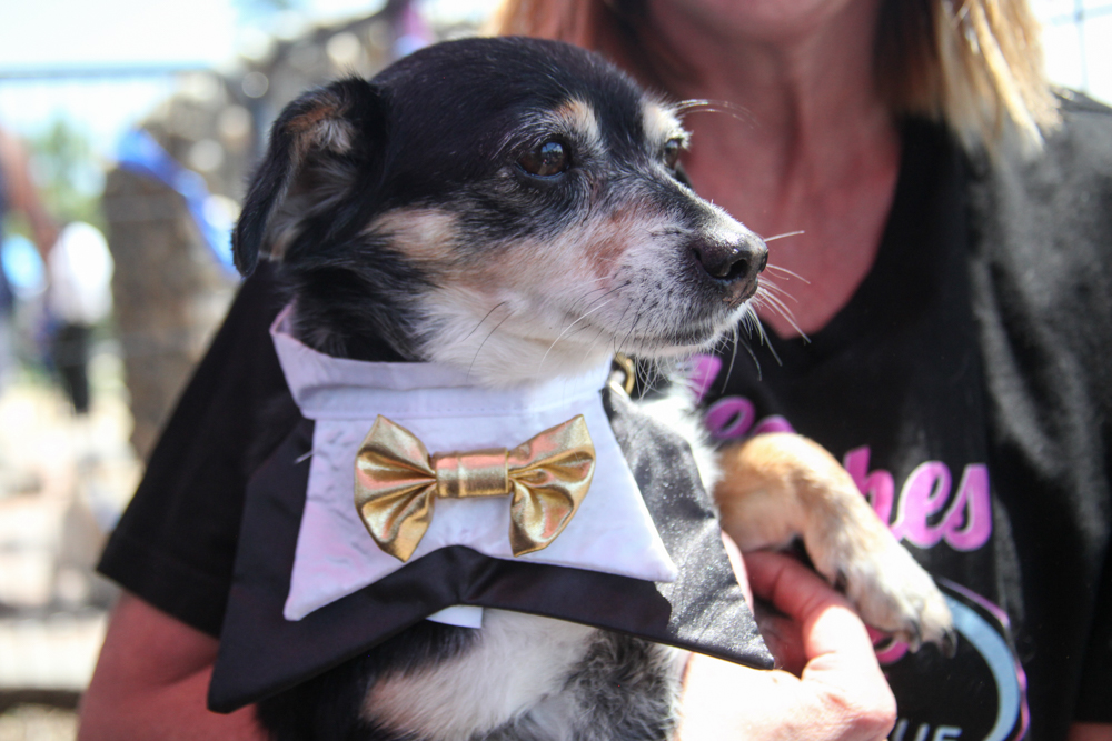 Six-year-old Ducky was one of the dogs up for adoption from Leashes of Love Rescue. Photo: Allison Jarrell