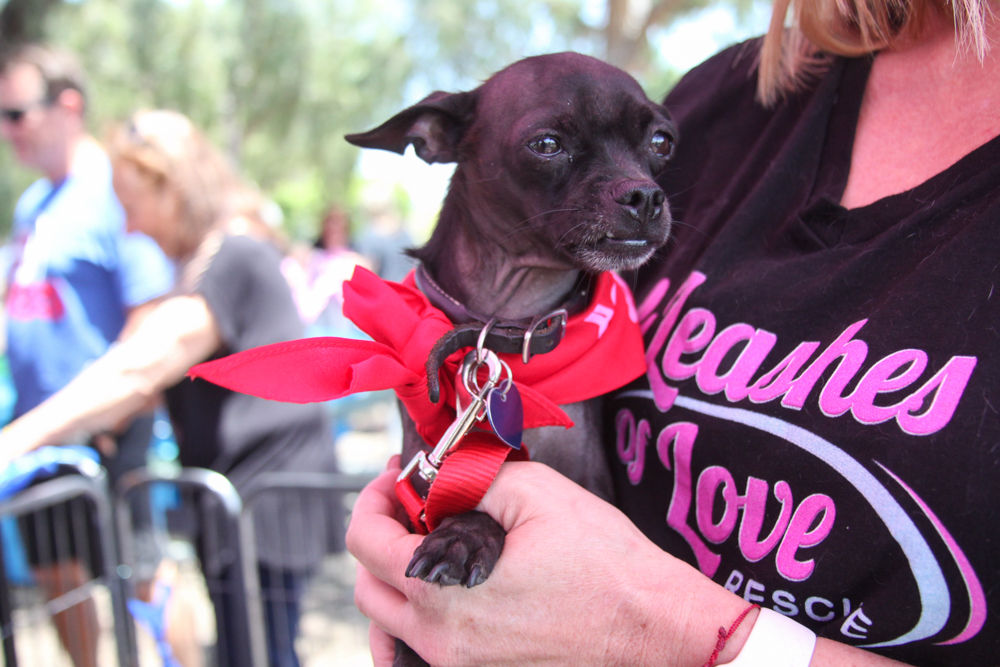 Five-year-old Casanova was one of the dogs up for adoption from Leashes of Love Rescue. Photo: Allison Jarrell