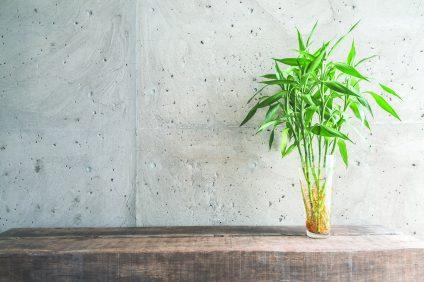Vase plant decoration with empty room