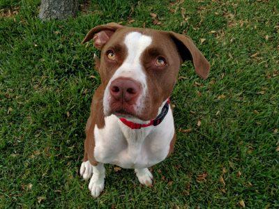 Tyson. Photo: Courtesy of the San Clemente/Dana Point Animal Shelter