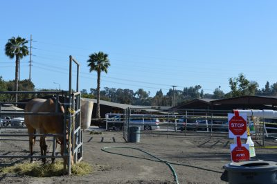 A horse stands in a corral, with 'Under Quarantine, Stop' signs posted nearby at Sycamore Trails Stables on Wednesday, April 18. Photo: Emily Rasmussen
