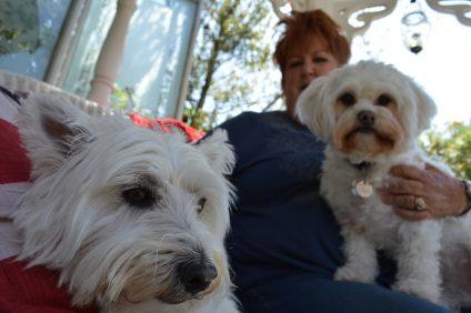Karen Rottmann holds two of her pups, Noel and Gizmo. Photo: Emily Rasmussen