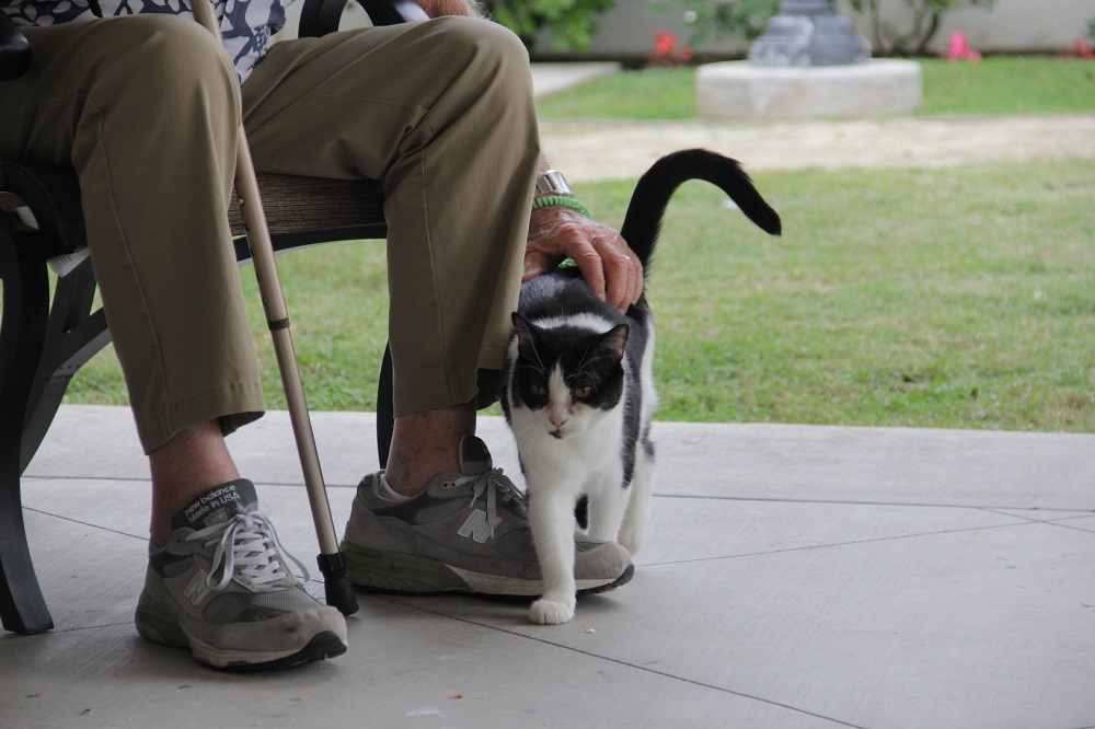 Gato, one of the Silverado San Juan Capistrano Memory Care Community's newest therapy pets, snuggles up to the legs of resident Dave Armstrong, 92, on Friday, Dec. 14.