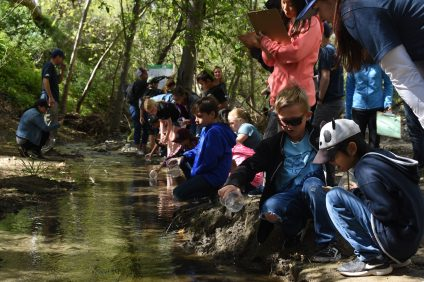 Students from Esencia Elementary release 10-week-old rainbow trout into Trabuco Creek during a class field trip on Friday, March 29. Photo: Jenna Ross